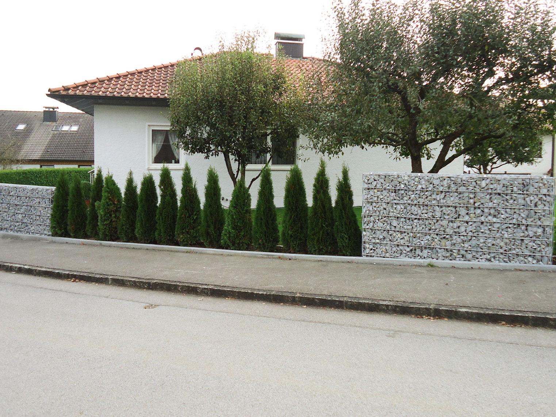Zaun aus Pergonen mit Thujenpflanzung